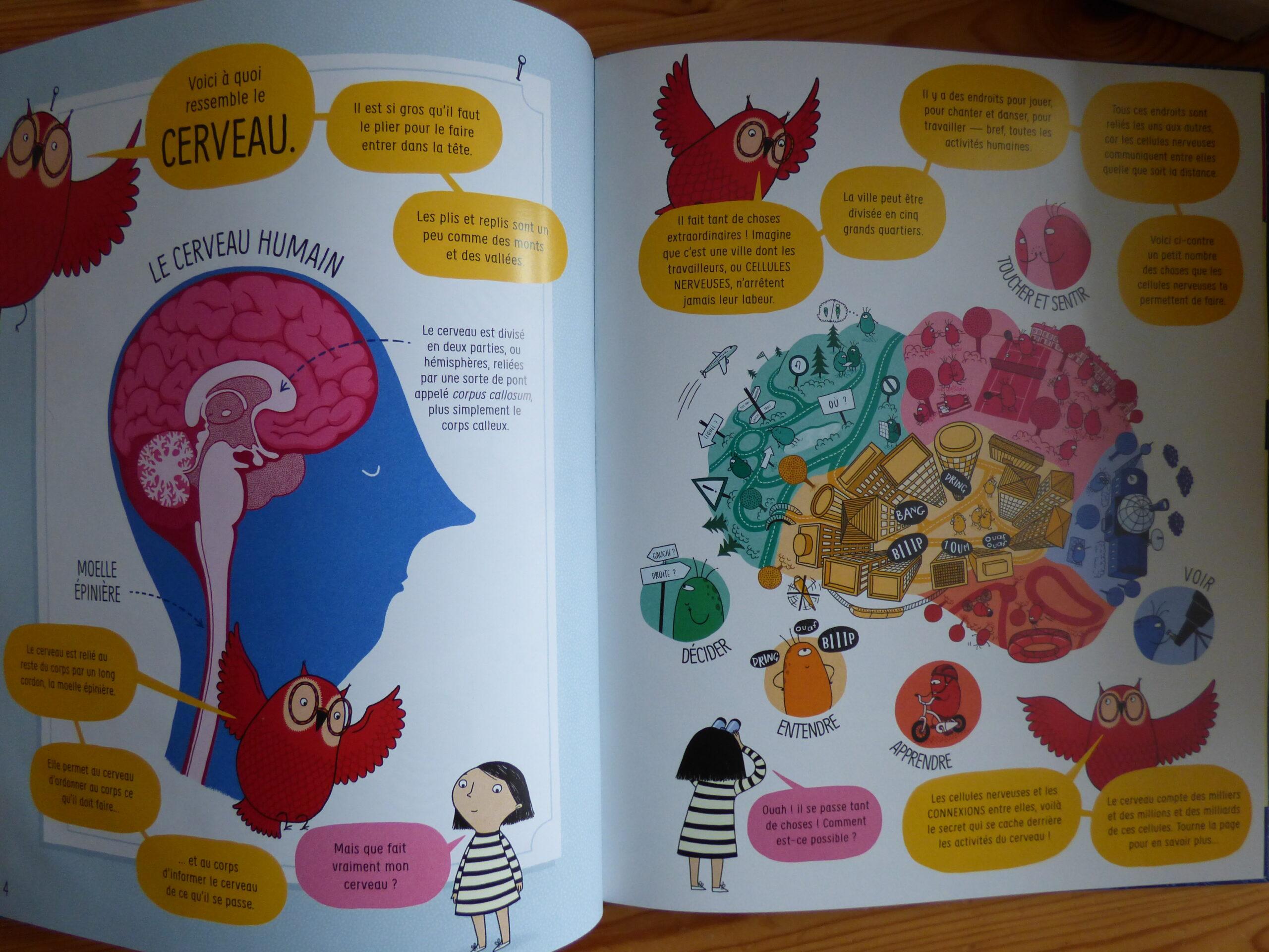 Extrait de Le Cerveau