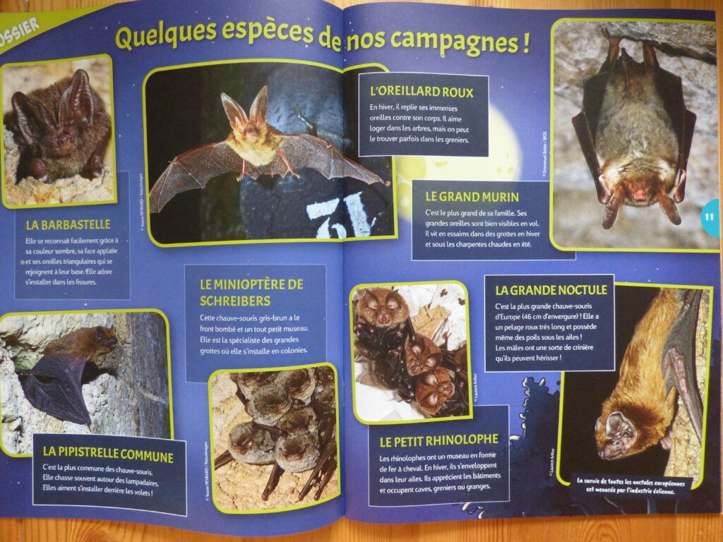 Oiseau Mag Junior, Automne 21, dossier